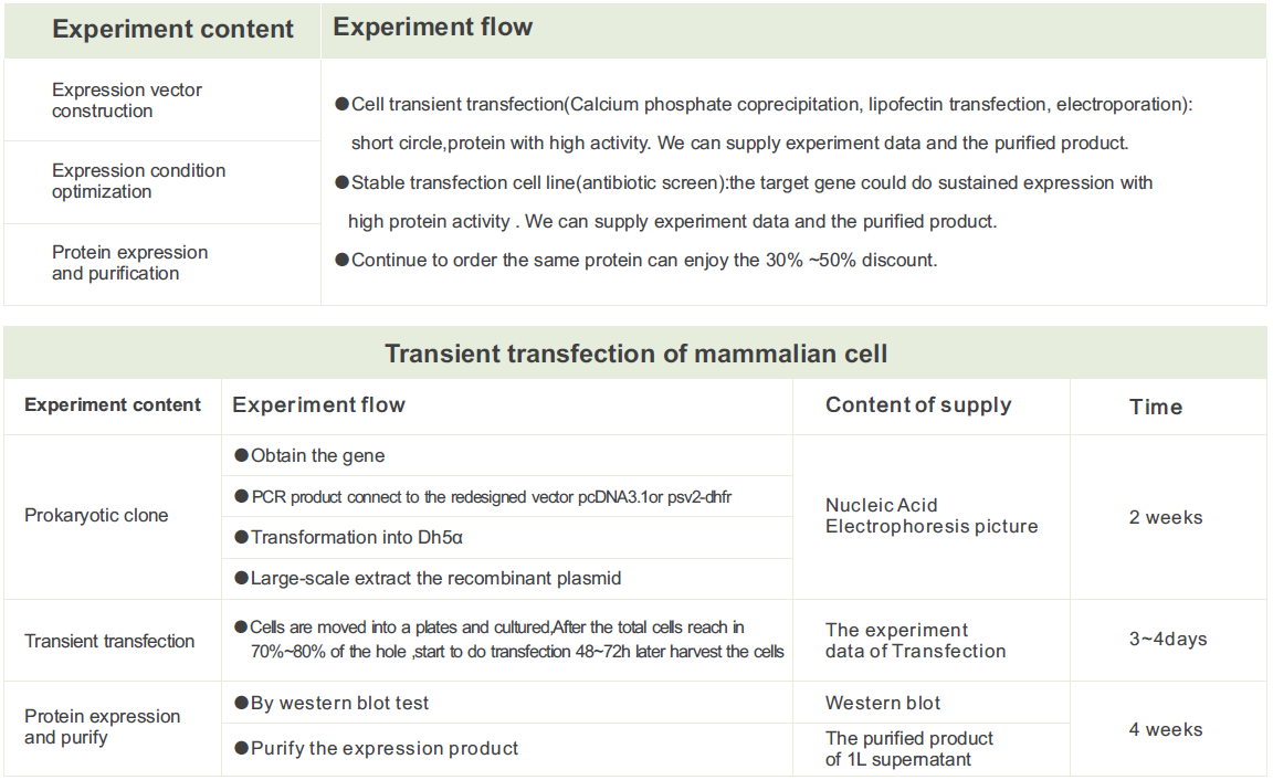 Fast and successful Mammalian cells Expression by Genecreate